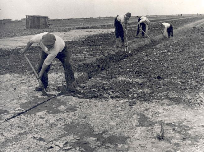 Polder workers; digging ditches by hand. 1941.