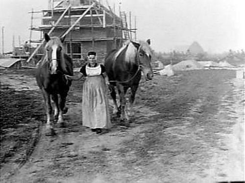 peasant woman Visser uit Sonburg, in the Noordoostpolder, with horses; September 1949.